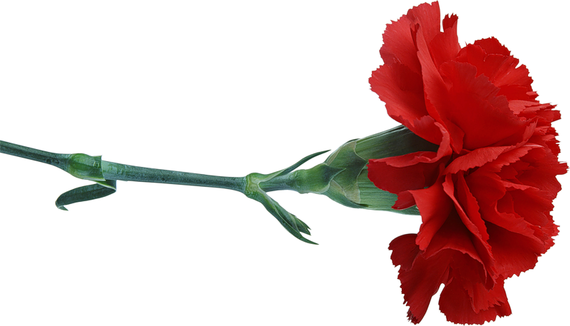 картинки цветы на белом фоне анимации 23 февраля свежая